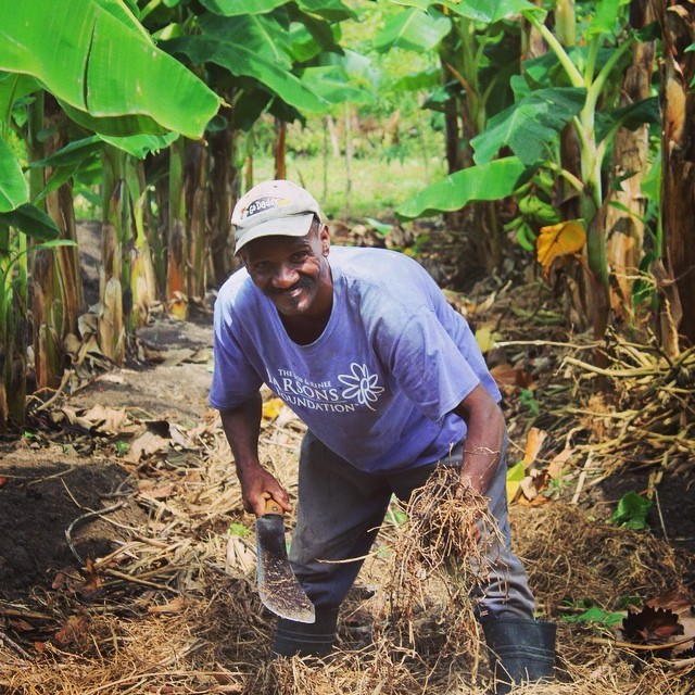 Making compost to get the garden's soil ready for planting! #hopeforhaitifl #haiti #connecthealempower #sustainablecommunities #farmersfirst #farming #summerinhaiti