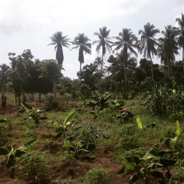 What a beautiful view! our reforestation programs are growing now our farmers are providing technical advice and guidance to other farmers. this view is from a plot of land where our farmers were helping a community member properly space and plant banana trees. #haiti #hopeforhaiti #agriculture #handstogether #farmersfirst