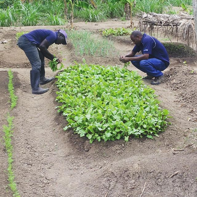 #spring has sprung! getting the gardens ready for the upcoming season. #haiti #hopeforhaiti #farming #farmersfirst