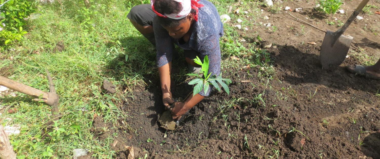 School Garden Planting